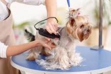 Cursuri Frizerie Canina Felina Cosmetica Coafura Animale Tunsori